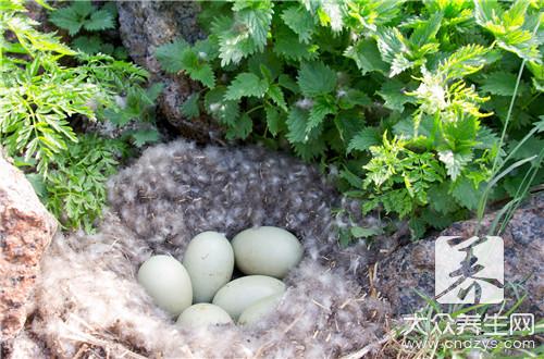 鸭蛋减肥法