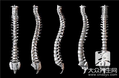 脊柱和脊椎的区别